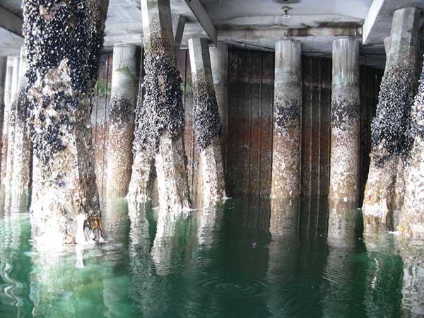 خوردگی در سازه های بتنی دریایی